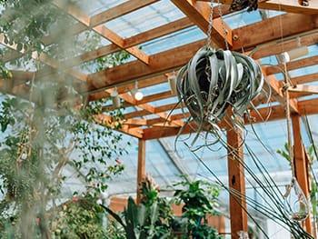 写真:インテリアグリーンショップ「botanico」